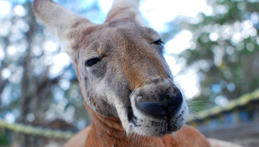 Thesis formatting services australia